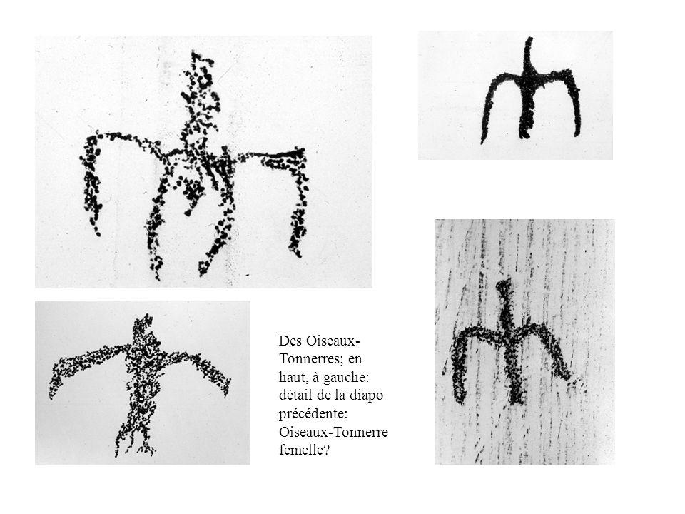 Des Oiseaux- Tonnerres; en haut, à gauche: détail de la diapo précédente: Oiseaux-Tonnerre femelle?