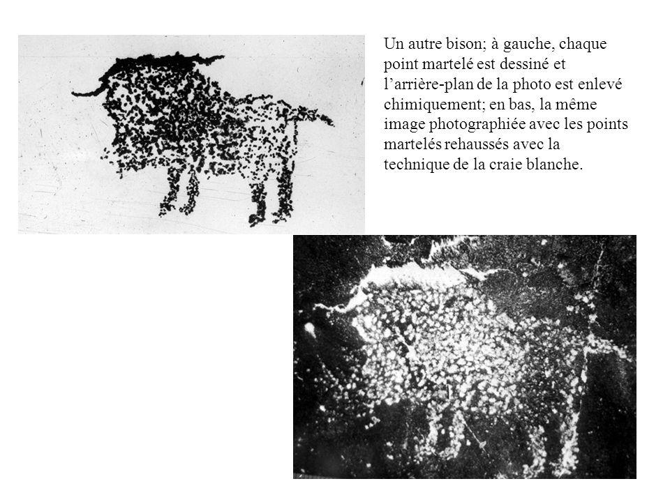 Un autre bison; à gauche, chaque point martelé est dessiné et larrière-plan de la photo est enlevé chimiquement; en bas, la même image photographiée a