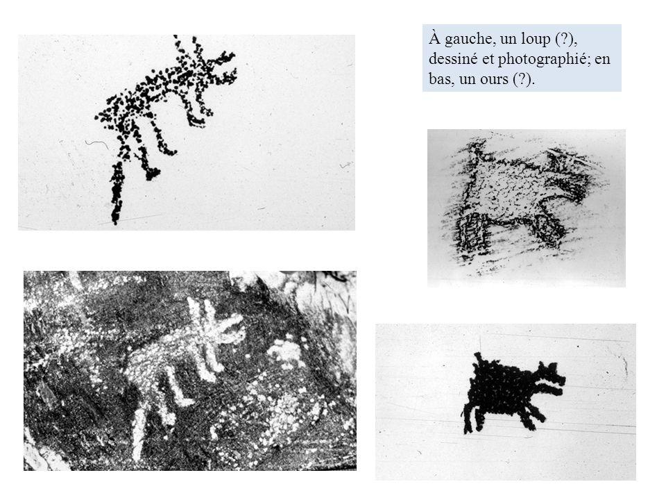 À gauche, un loup (?), dessiné et photographié; en bas, un ours (?).