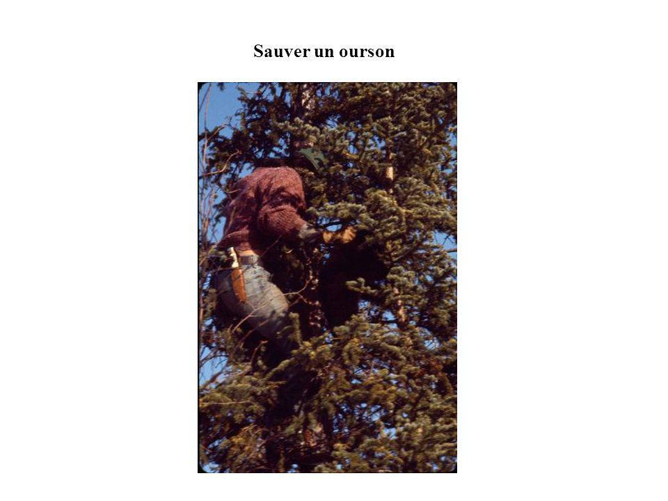 Sauver un ourson
