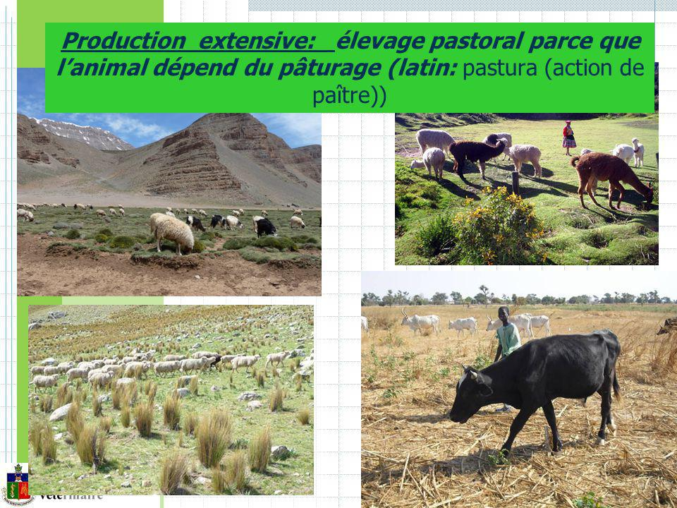 Production extensive: élevage pastoral parce que lanimal dépend du pâturage (latin: pastura (action de paître))
