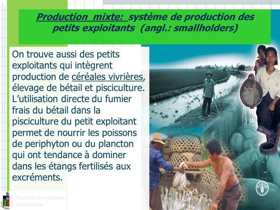 On trouve aussi des petits exploitants qui intègrent production de céréales vivrières, élevage de bétail et pisciculture.