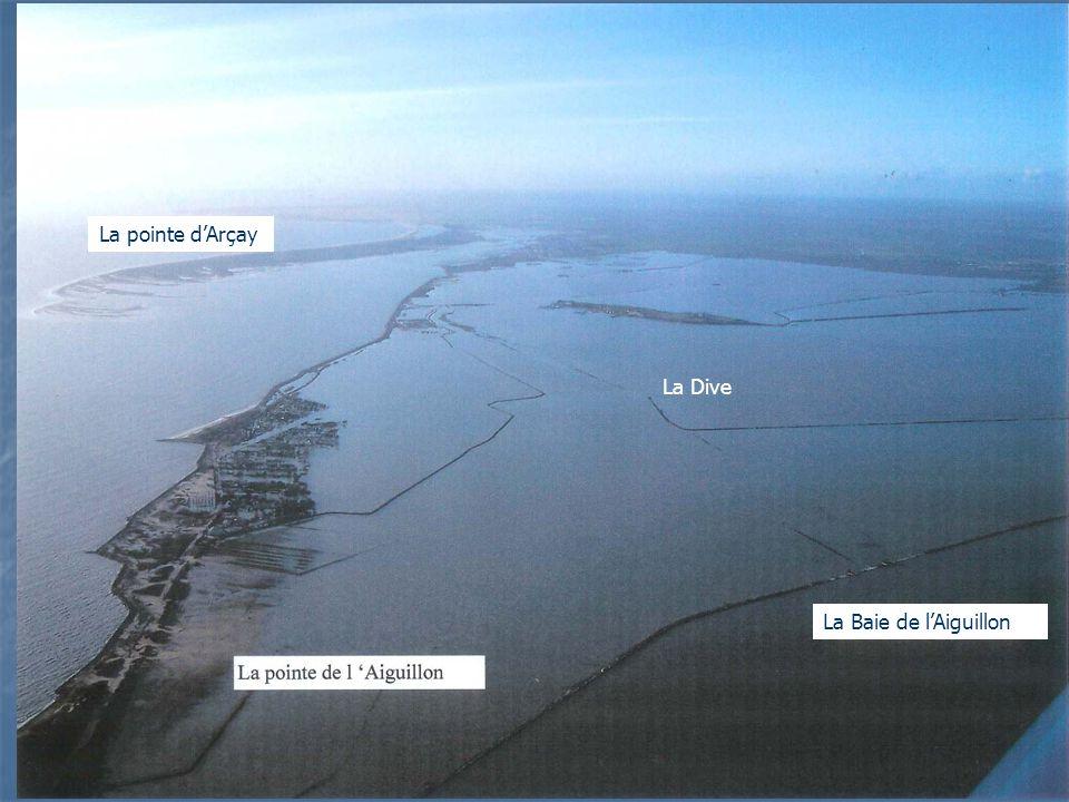 La pointe dArçay La Baie de lAiguillon La Dive