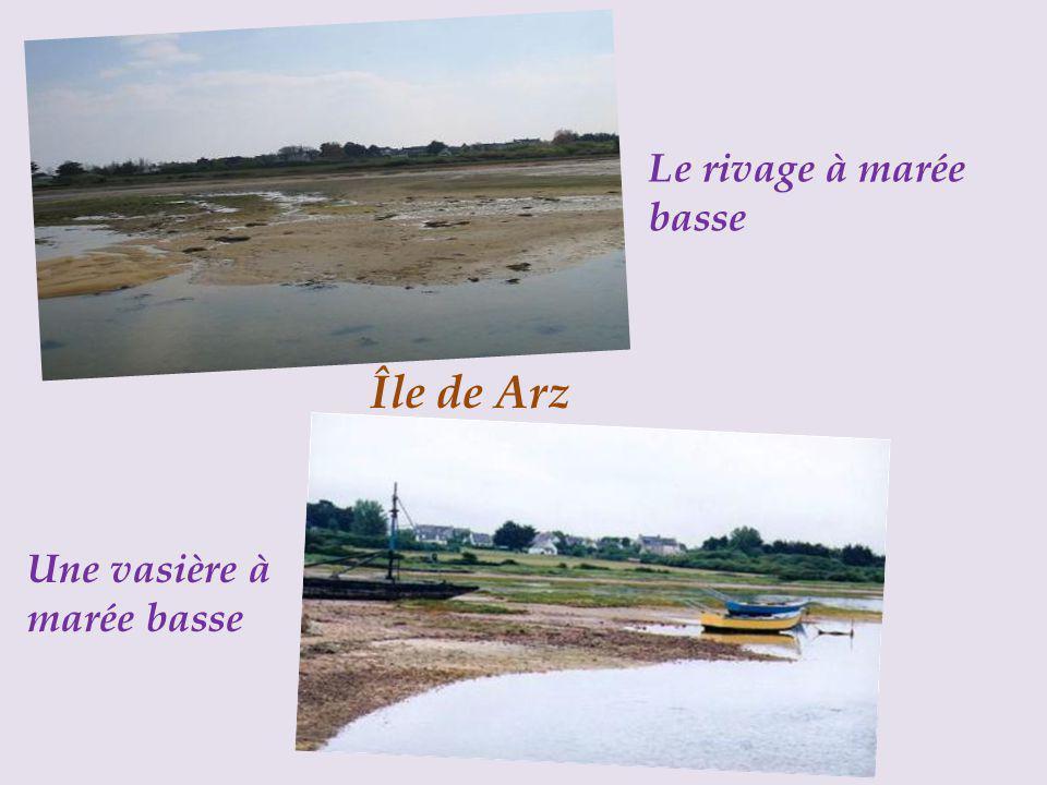 Île de Arz Le rivage à marée basse Une vasière à marée basse