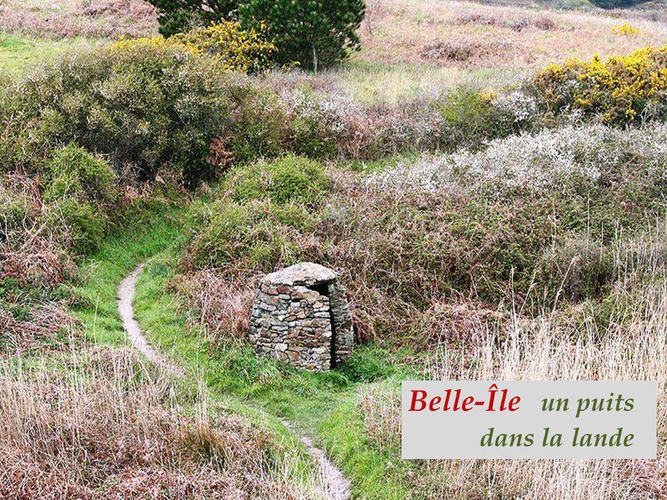 Belle-Île un puits. dans la lande