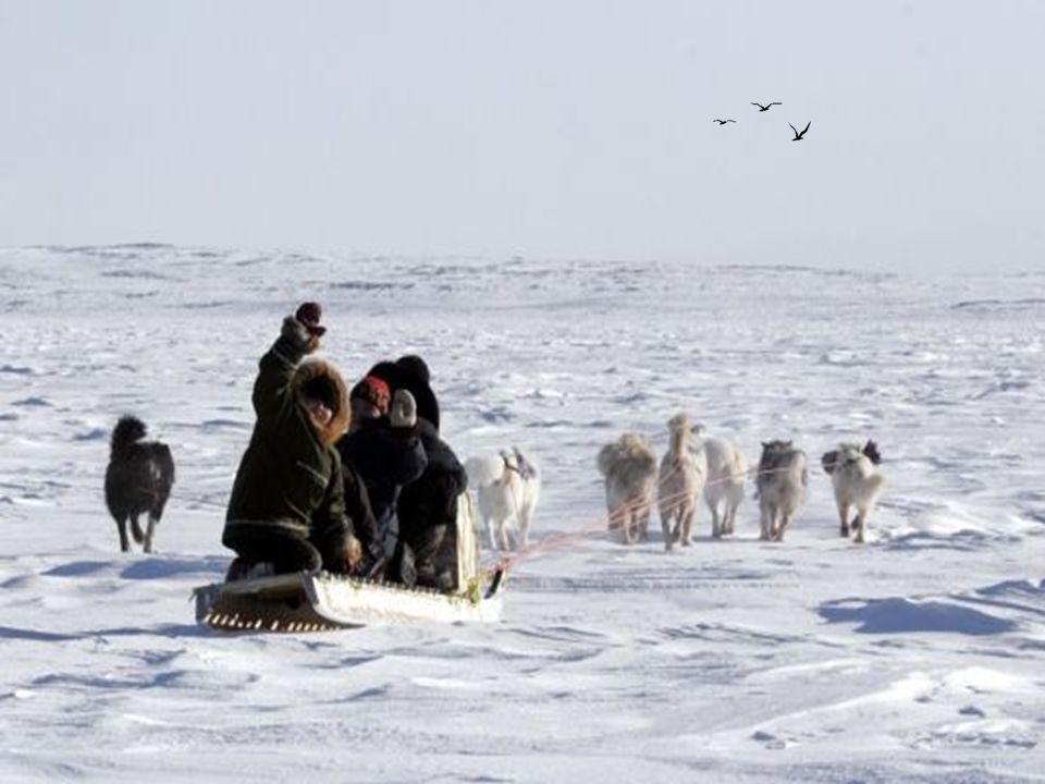 Un chasseur Inuit avec son traineau