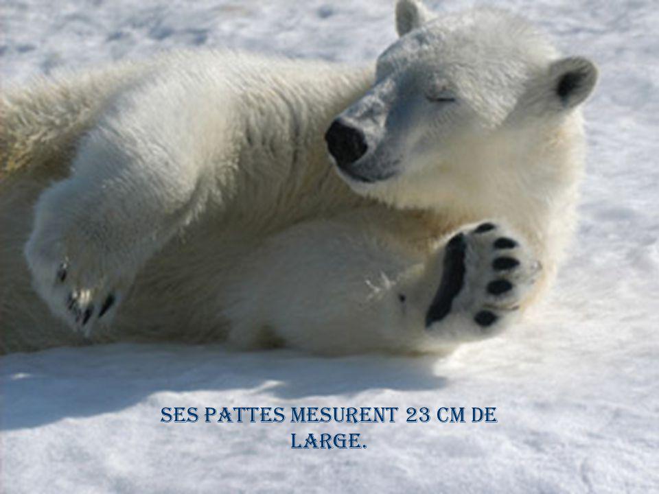 Ses pattes mesurent 23 cm de large.