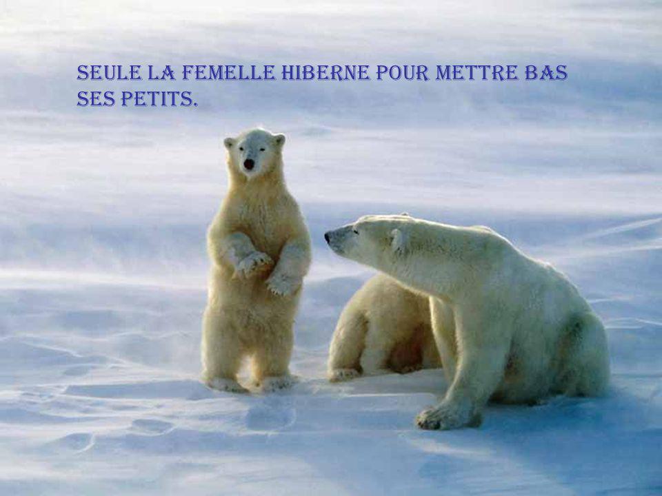 Les oursons demeurent auprès de leur mère jusqu à lâge de 3 ans.