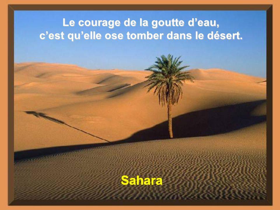 Le désert est une nonne : aucun homme ne le courtise, il a fait vœu de silence à travers les âges, serein, immuable, au-delà de toutes poursuites, et de tout abandon.