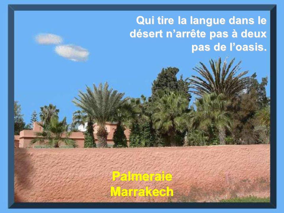Palmeraie Marrakech Qui tire la langue dans le désert narrête pas à deux pas de loasis.