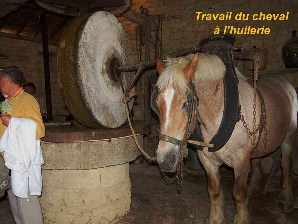 Travail du cheval à lhuilerie