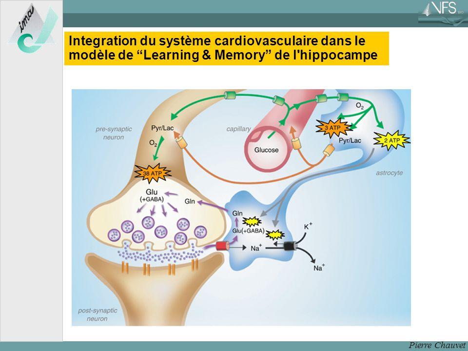 Pierre Chauvet Integration du système cardiovasculaire dans le modèle de Learning & Memory de l hippocampe
