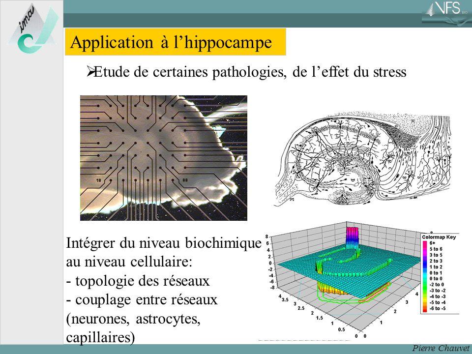 Pierre Chauvet Application à lhippocampe Etude de certaines pathologies, de leffet du stress Intégrer du niveau biochimique au niveau cellulaire: - topologie des réseaux - couplage entre réseaux (neurones, astrocytes, capillaires)