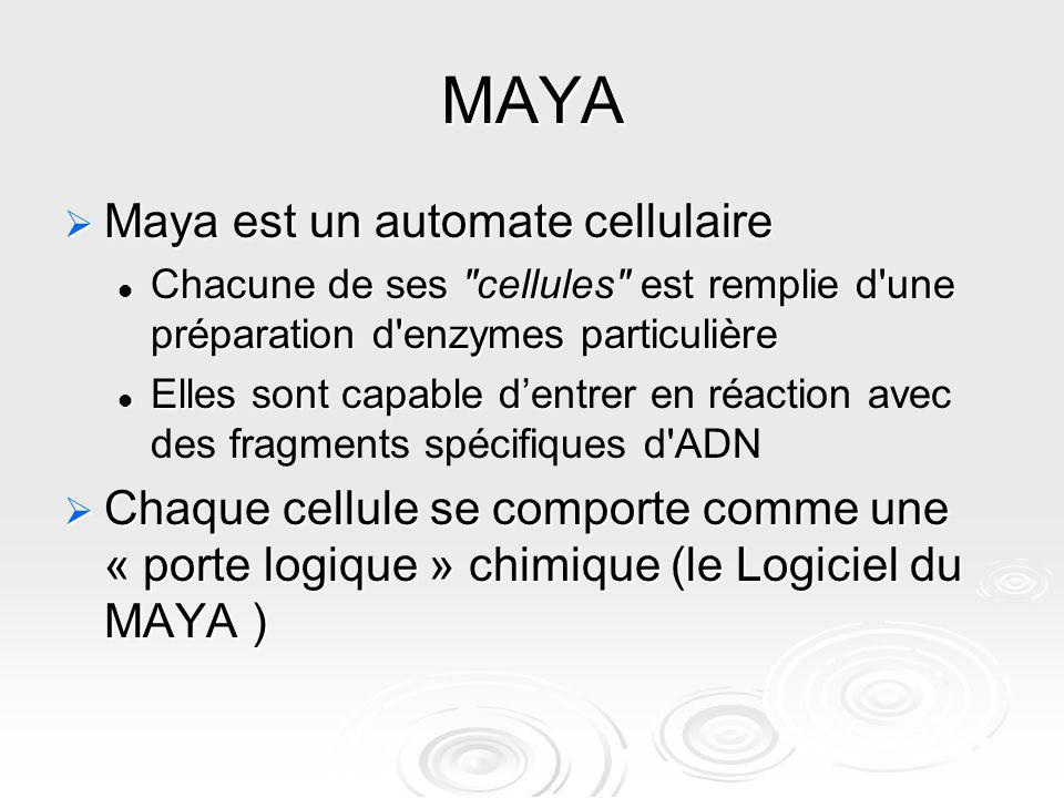 MAYA Maya est un automate cellulaire Maya est un automate cellulaire Chacune de ses