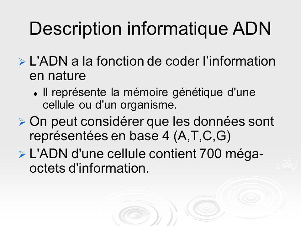 Description informatique ADN L'ADN a la fonction de coder linformation en nature L'ADN a la fonction de coder linformation en nature Il représente la