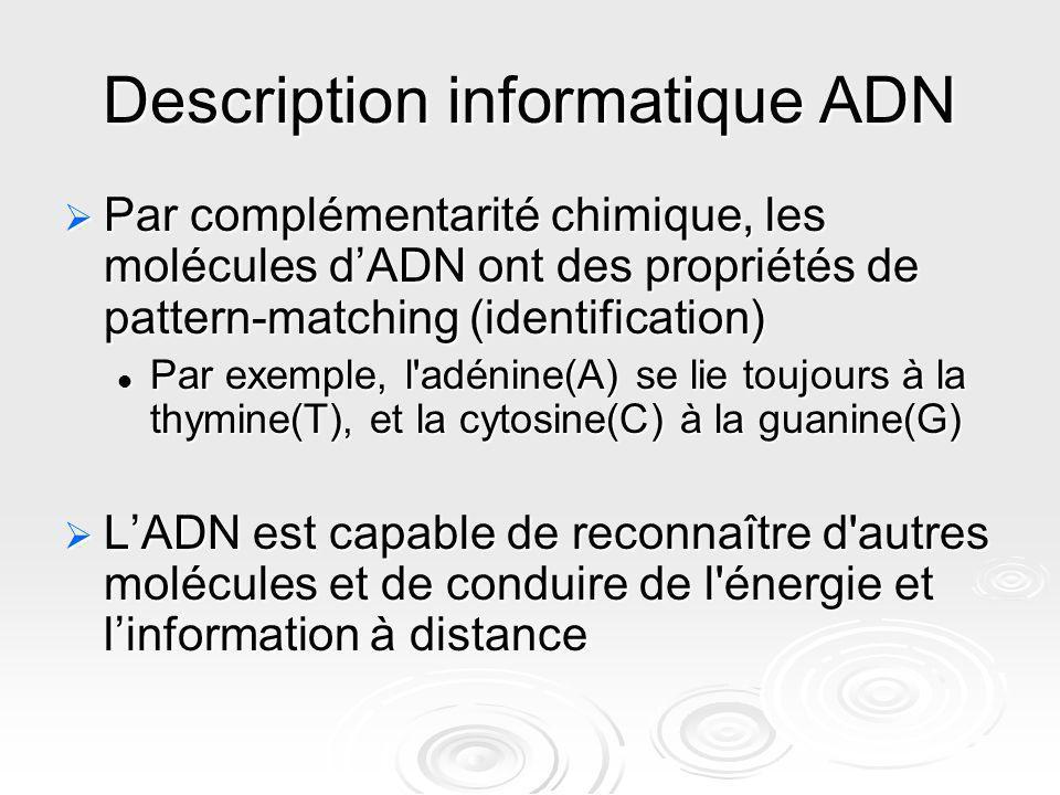 Description informatique ADN Par complémentarité chimique, les molécules dADN ont des propriétés de pattern-matching (identification) Par complémentar