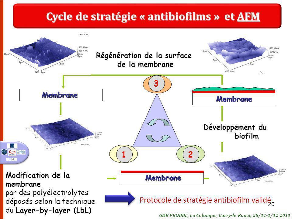 20Membrane Membrane Modification de la membrane par des polyélectrolytes déposés selon la technique du Layer-by-layer (LbL) Développement du biofilm Régénération de la surface de la membraneMembrane Cycle de stratégie « antibiofilms » et AFM 321 GDR PROBBE, La Calanque, Carry-le Rouet, 28/11-1/12 2011 Protocole de stratégie antibiofilm validé