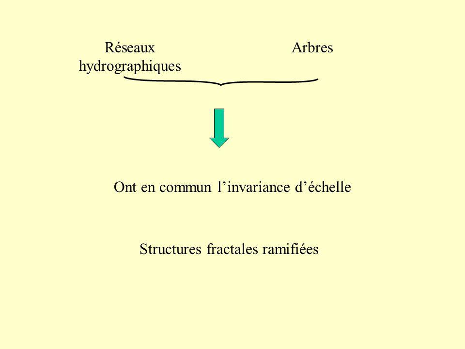 Réseaux hydrographiques Arbres Structures fractales ramifiées Ont en commun linvariance déchelle