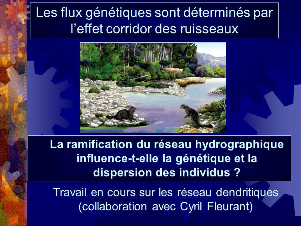 Les flux génétiques sont déterminés par leffet corridor des ruisseaux La ramification du réseau hydrographique influence-t-elle la génétique et la dis