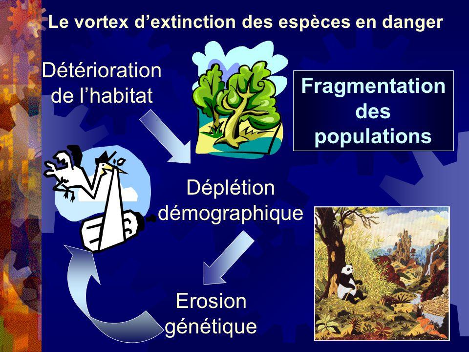 Déplétion démographique Détérioration de lhabitat Fragmentation des populations Le vortex dextinction des espèces en danger Erosion génétique