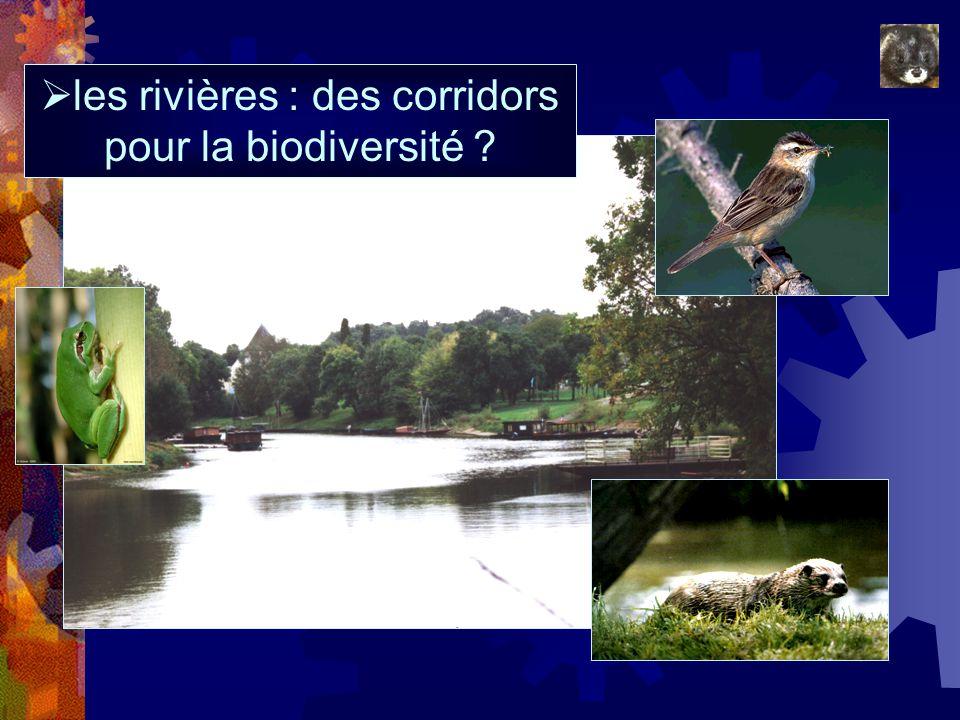 les rivières : des corridors pour la biodiversité ?