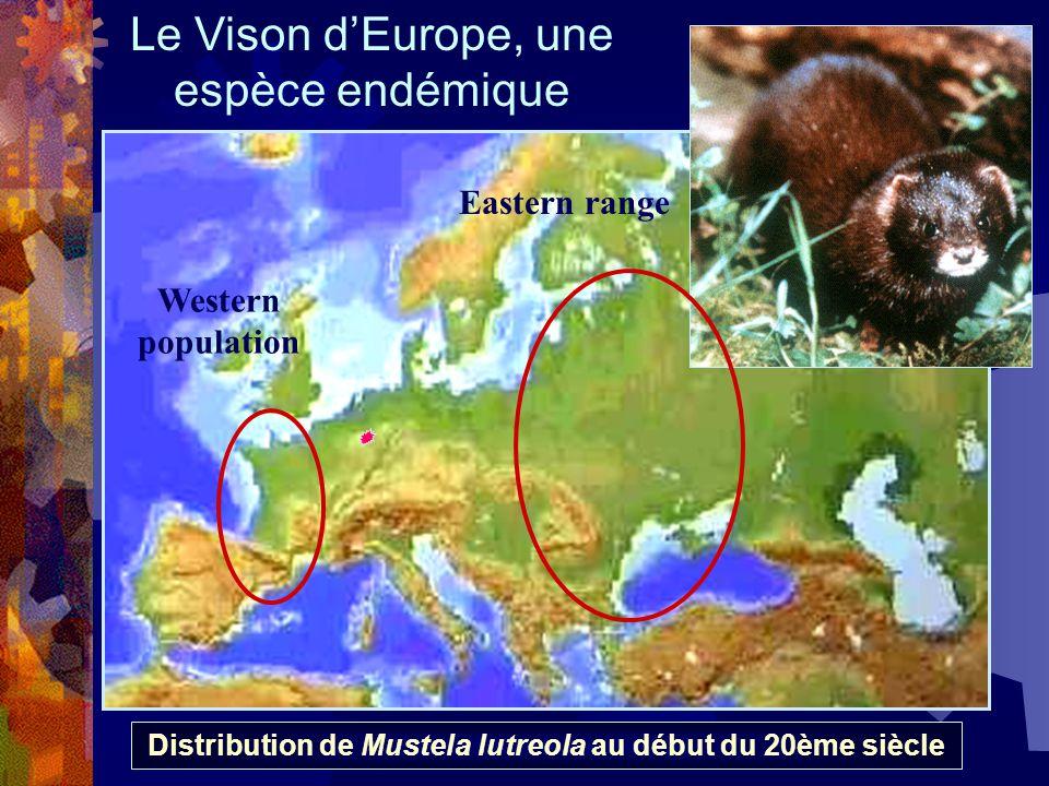 Distribution de Mustela lutreola au début du 20ème siècle Western population Eastern range Le Vison dEurope, une espèce endémique