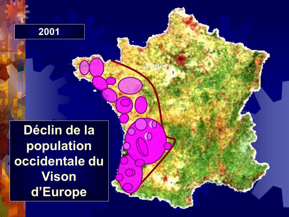 Angers Déclin de la population occidentale du Vison dEurope 197619841989199219982001
