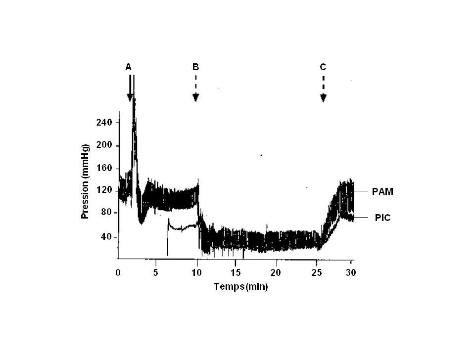 DSCL (²%) temps (min) -0,6 -0,5 -0,4 -0,3 -0,2 -0,1 0 0,1 # * 906075105120135150165180 PPC ( mmHg ) 0 20 40 60 80 100 120 140 # * PIC (mmHg ) 0 5 10 15 20 25 30 35 # * Effet de lhypoxie-hypotension après traumatisme Ract,J Neurotrauma,2001