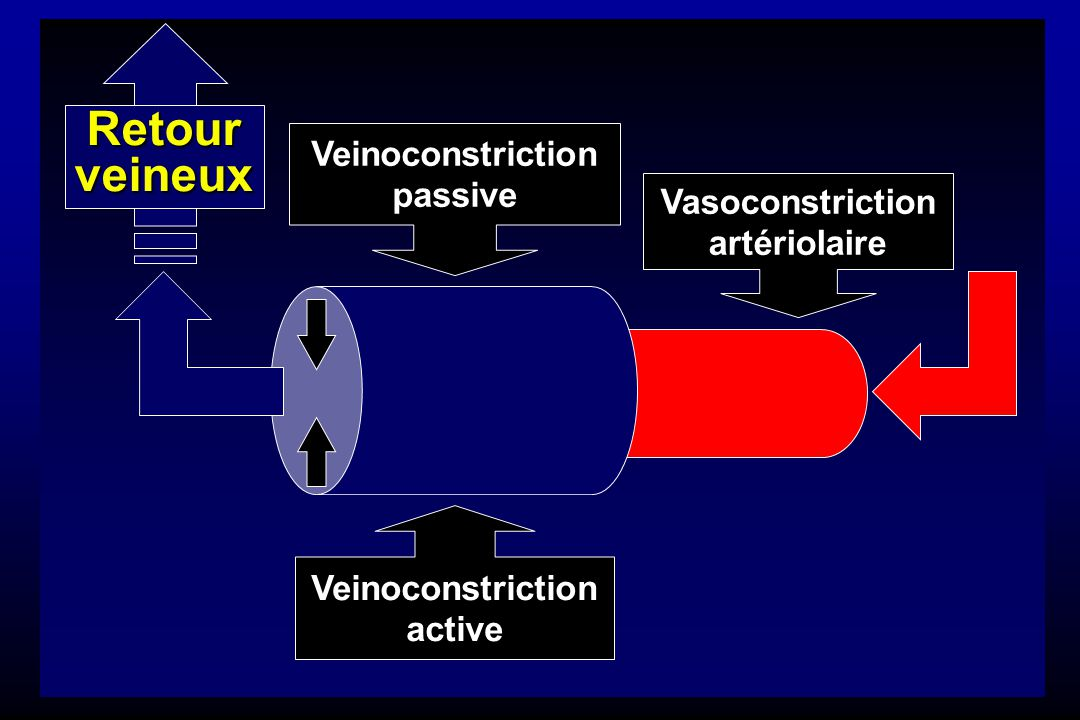 Vasoconstriction artériolaire Veinoconstriction active Veinoconstriction passive Retourveineux