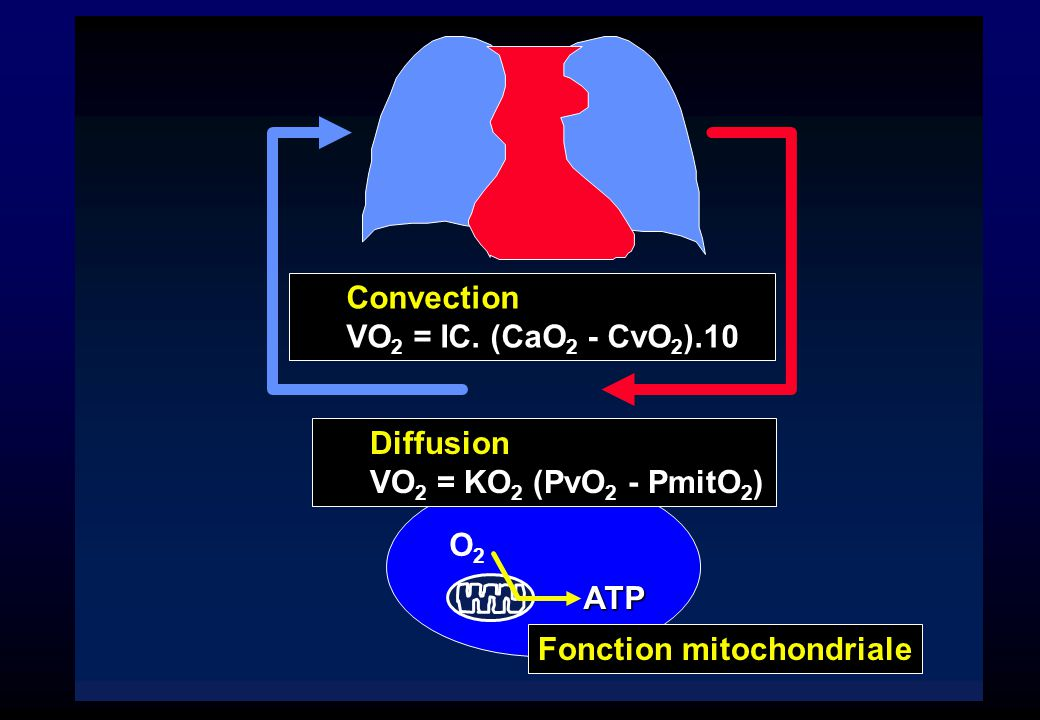 ATP Fonction mitochondriale Convection ).10 VO 2 = IC. (CaO 2 - CvO 2 ).10 Diffusion VO 2 = KO 2 (PvO 2 - PmitO 2 ) O2O2