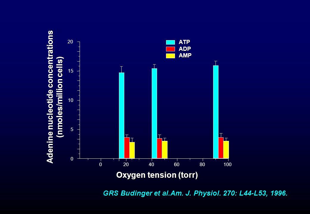 020 40 60 80 100 0 5 10 15 20 Adenine nucleotide concentrations (nmoles/million cells) Oxygen tension (torr) ATPADPAMP GRS Budinger et al.Am. J. Physi