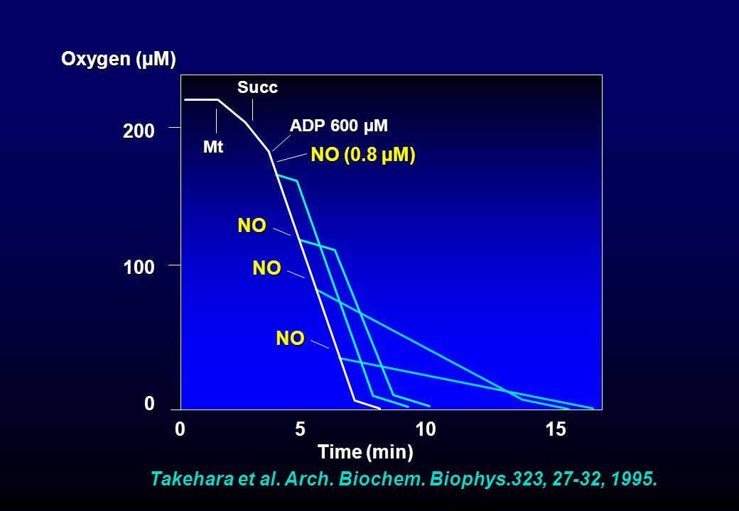 Takehara et al. Arch. Biochem. Biophys.323, 27-32, 1995. Oxygen (µM) 0 5 10 15 Time (min) Time (min) 200100 0 Mt Succ ADP 600 µM NO (0.8 µM) NO NO NO