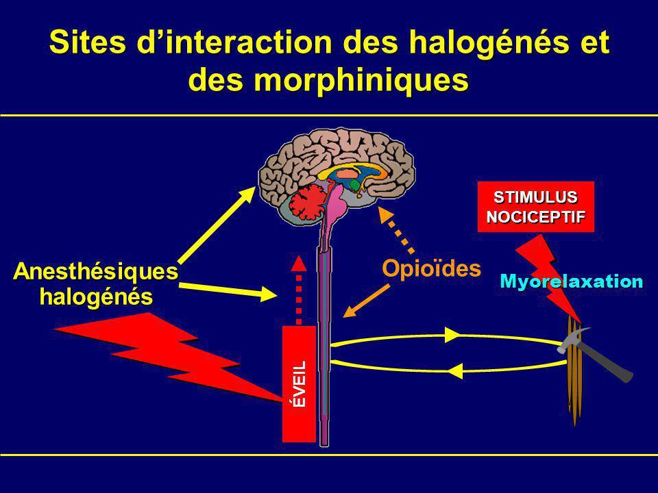 Anesthésiques halogénés Opioïdes STIMULUSNOCICEPTIF ÉVEIL Myorelaxation Sites dinteraction des halogénés et des morphiniques
