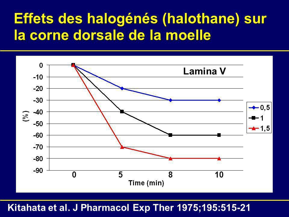 Effets des halogénés (halothane) sur la corne dorsale de la moelle 05810 Lamina V Kitahata et al. J Pharmacol Exp Ther 1975;195:515-21
