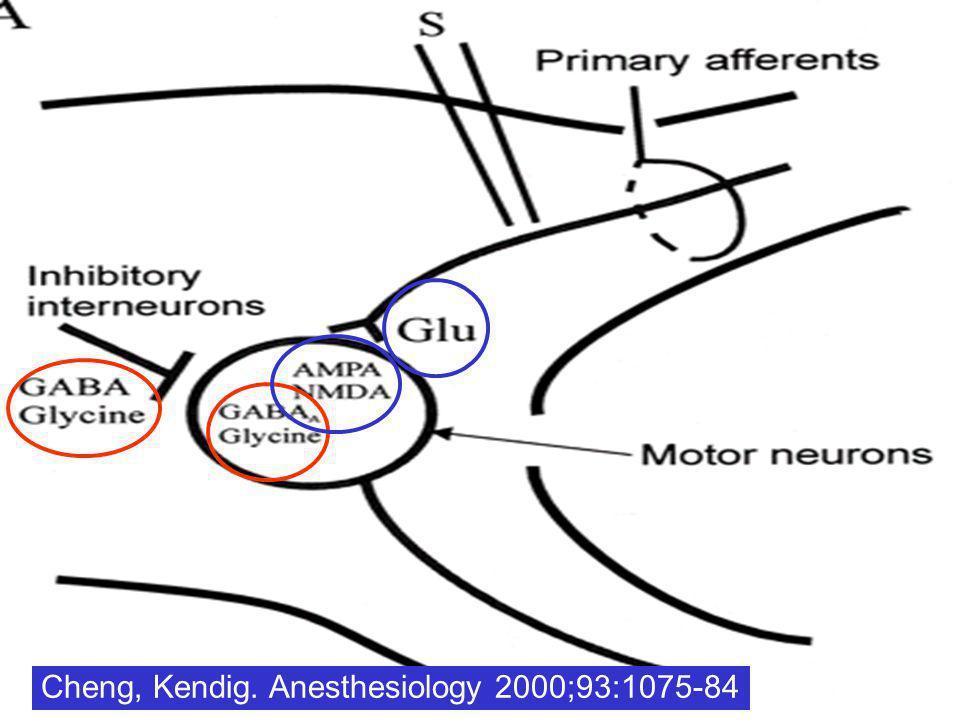 Cibles potentiels des halogénés au niveau de la corne postérieure de la moelle Glycine Idem pour la corne antérieure de la moelle Cheng, Kendig. Anest
