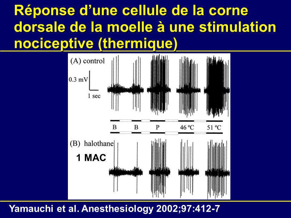 Réponse dune cellule de la corne dorsale de la moelle à une stimulation nociceptive (thermique) Yamauchi et al.