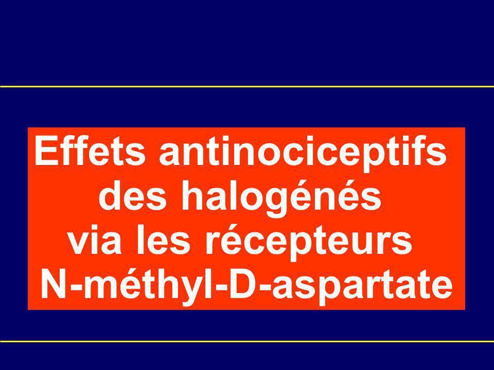 Effets antinociceptifs des halogénés via les récepteurs N-méthyl-D-aspartate