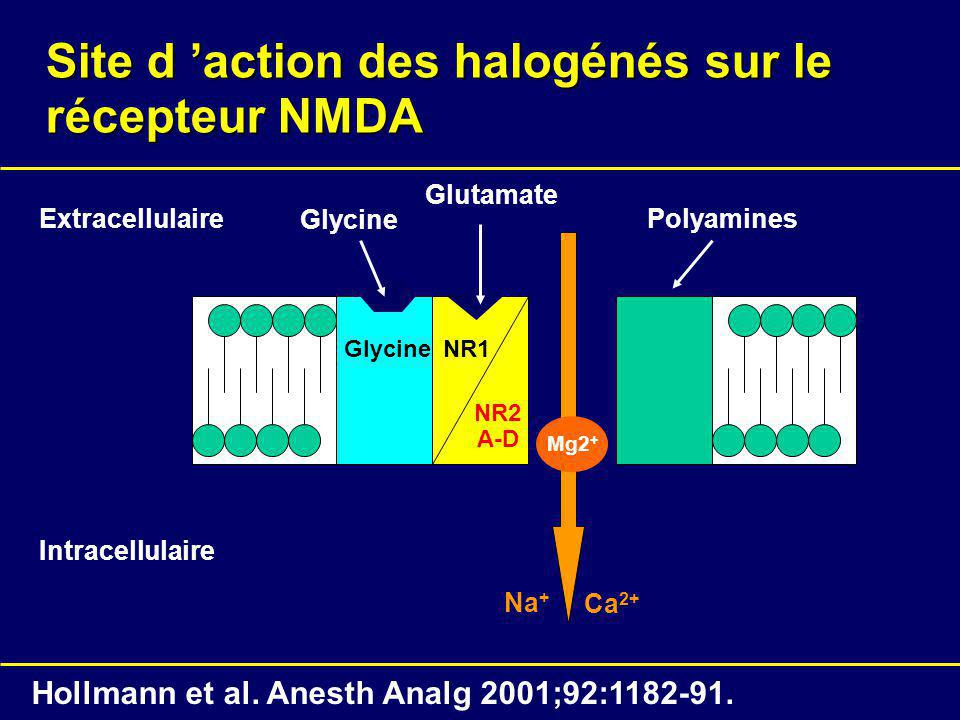 Site d action des halogénés sur le récepteur NMDA NR1 NR2 A-D Glycine Intracellulaire Extracellulaire Glycine Glutamate Polyamines Mg2 + Ca 2+ Na + Ho