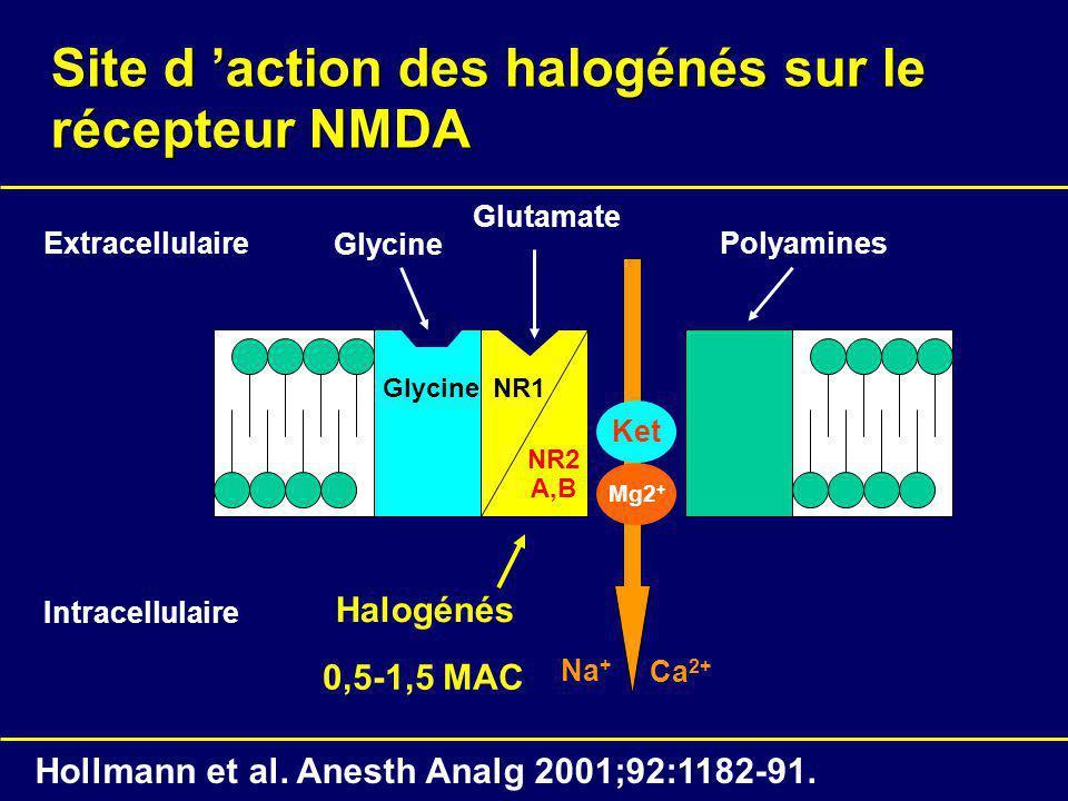 Site d action des halogénés sur le récepteur NMDA NR1 NR2 A,B Glycine Intracellulaire Extracellulaire Glycine Glutamate Polyamines Mg2 + Ca 2+ Na + Ho
