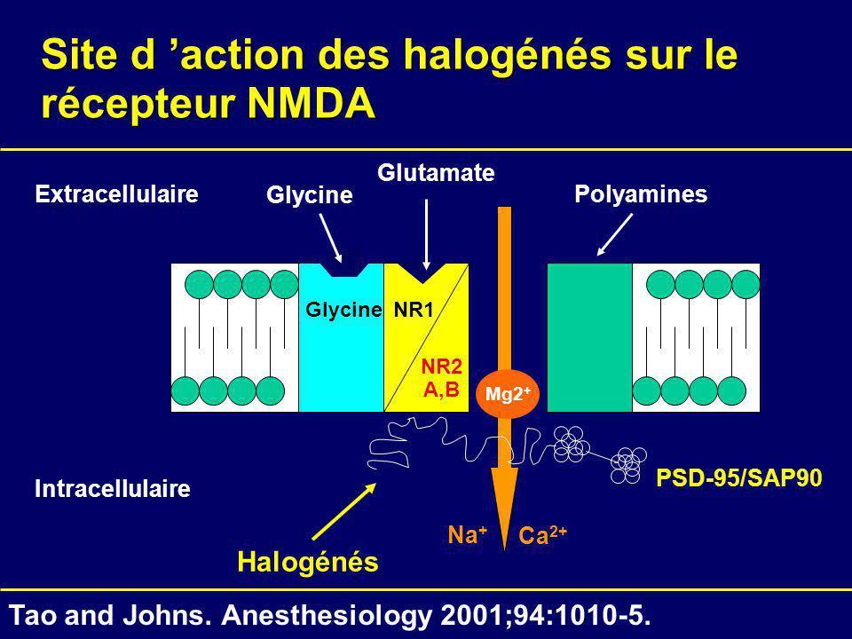 Site d action des halogénés sur le récepteur NMDA NR1 NR2 A,B Glycine Intracellulaire Extracellulaire Glycine Glutamate Polyamines Mg2 + Ca 2+ Na + Ta