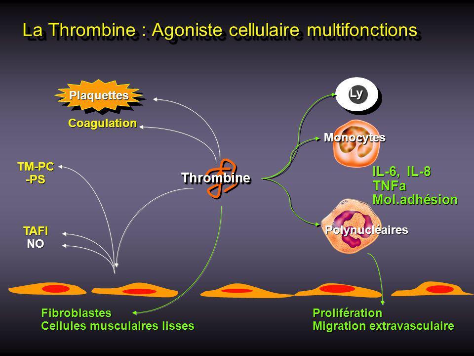 Antithrombin III stimulates prostacyclin (PGI 2 ) production by endothelial cells inhibits platelet aggregation PGI 2 Vasodilatation inhibits TNF inhibits TNF synthesis by monocytes inhibits reactive O 2 species and elastase production by granulocytes inhibits neutrophil adhesion to endothelium