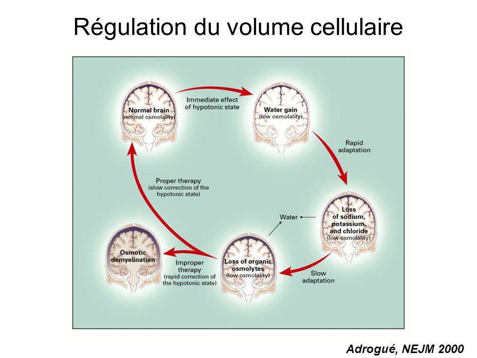 Régulation du volume cellulaire Adrogué, NEJM 2000