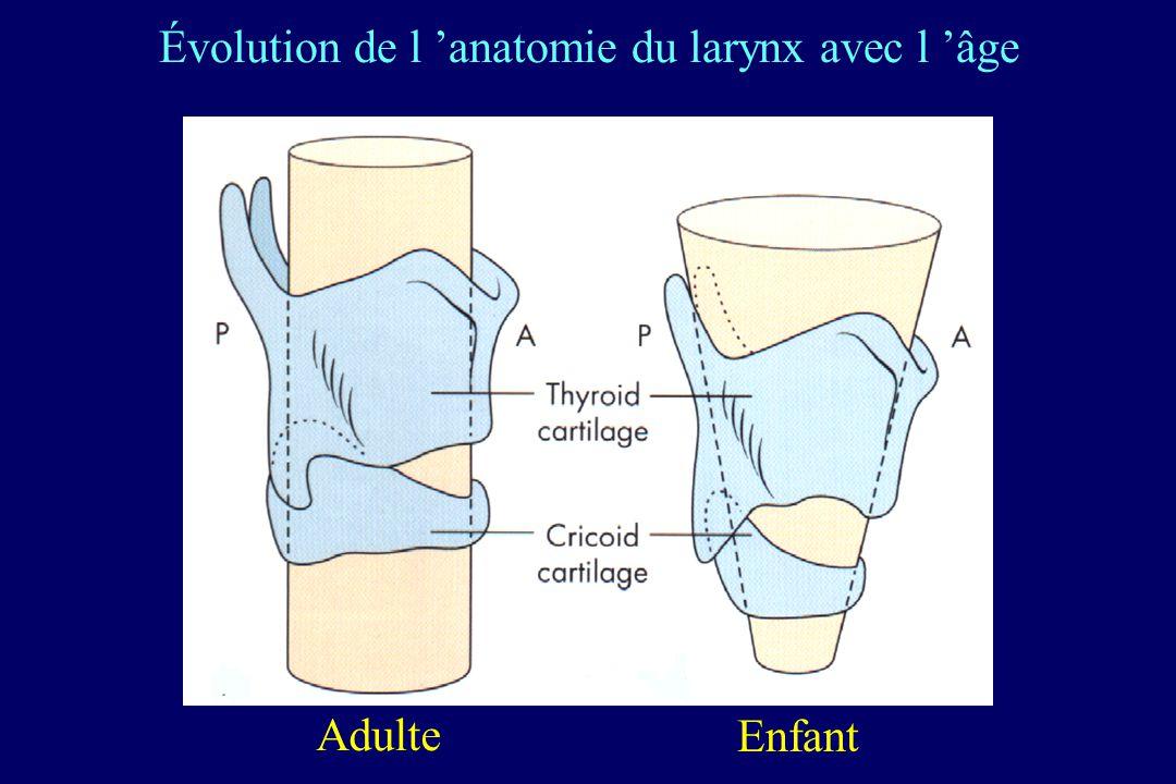 Adulte Enfant Évolution de l anatomie du larynx avec l âge
