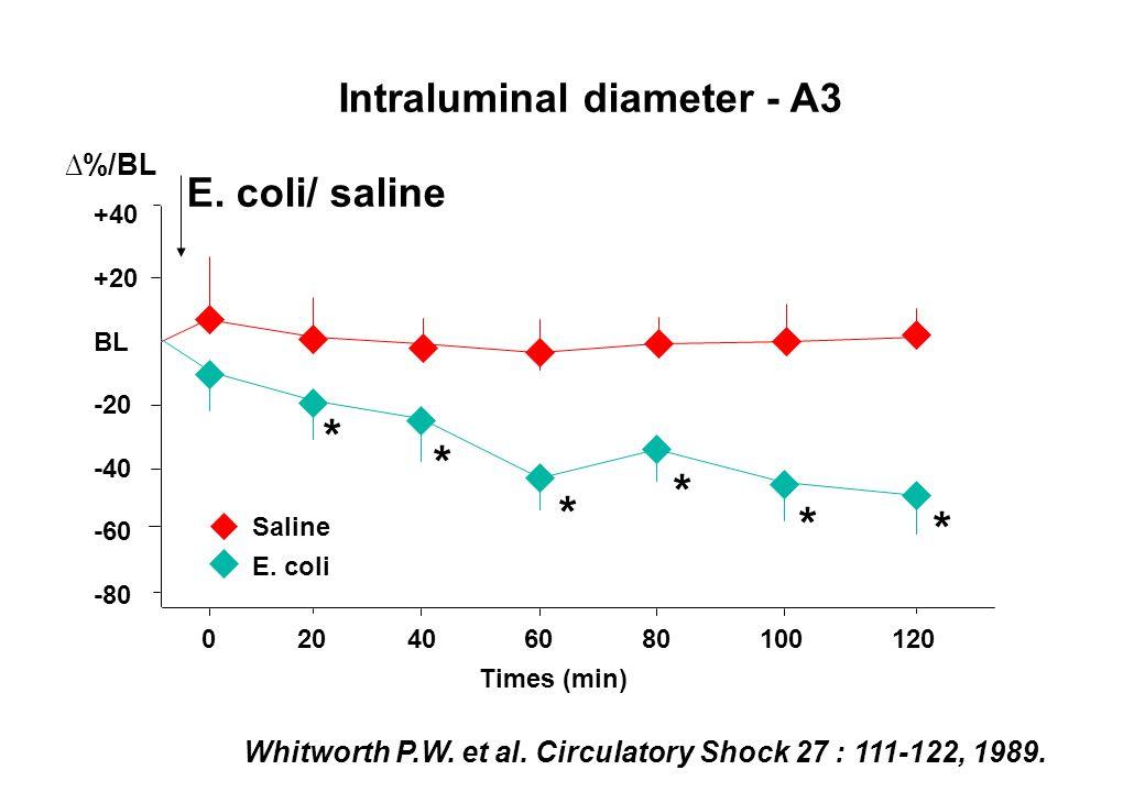 0 20 40 60 80 100 120 Times (min) Intraluminal diameter - A3 %/BL +40 +20 BL -20 -40 -60 -80 Saline E. coli E. coli/ saline * * * * * * Whitworth P.W.
