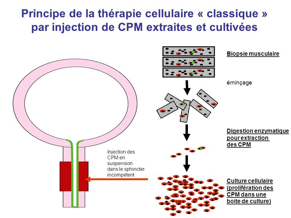 Principe de la thérapie cellulaire « classique » par injection de CPM extraites et cultivées éminçage Digestion enzymatique pour extraction des CPM Cu