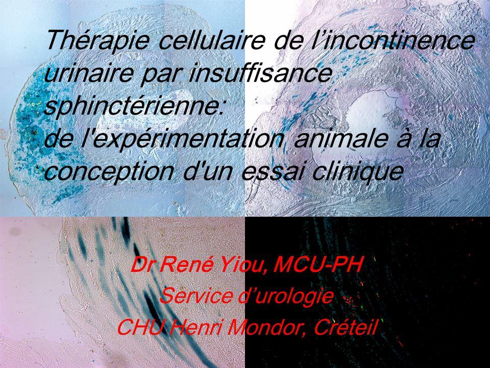 Thérapie cellulaire de lincontinence urinaire par insuffisance sphinctérienne: de l'expérimentation animale à la conception d'un essai clinique Dr Ren