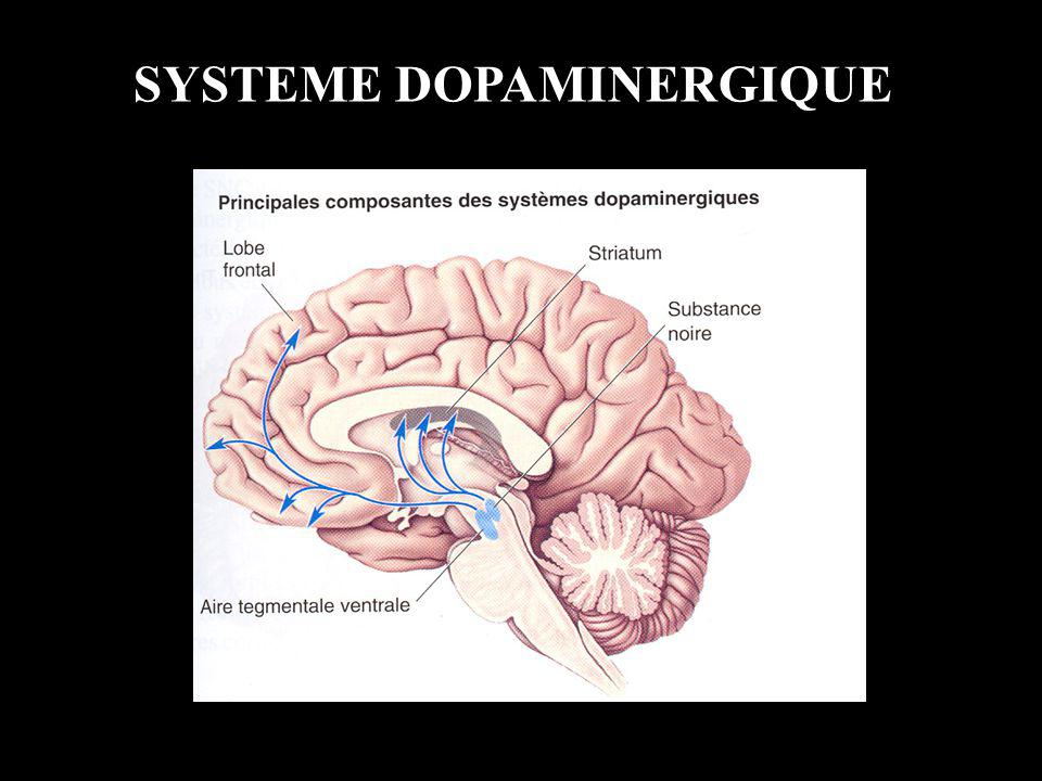 SYSTEME DOPAMINERGIQUE