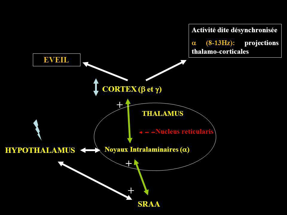 CORTEX ( et ) THALAMUS SRAA HYPOTHALAMUS Noyaux Intralaminaires ( ) Nucleus reticularis EVEIL Activité dite désynchronisée (8-13Hz): projections thala