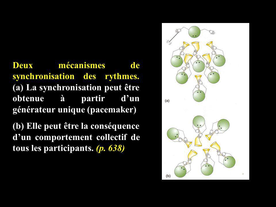 Deux mécanismes de synchronisation des rythmes. (a) La synchronisation peut être obtenue à partir dun générateur unique (pacemaker) (b) Elle peut être