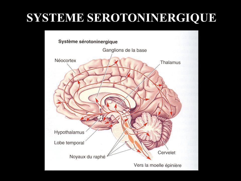 SYSTEME SEROTONINERGIQUE